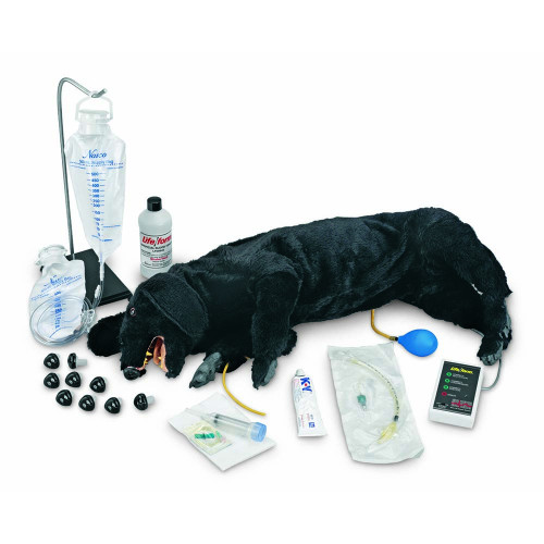 Advanced Sanitary CPR Dog