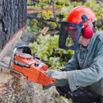 Man cutting down tree with chainsaw